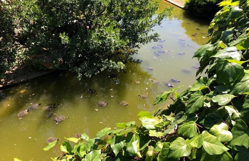 Parco 2 Giugno: tranquilli bambini, le tartarughe stanno bene. E a luglio si riapre