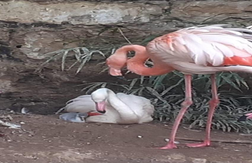 Nasce un  fenicottero a Parco d'Orleans