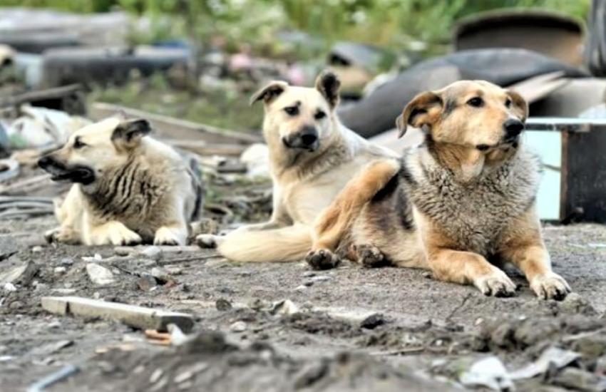 Catania, lotta al randagismo, ecco l'elenco dei volontari animalisti