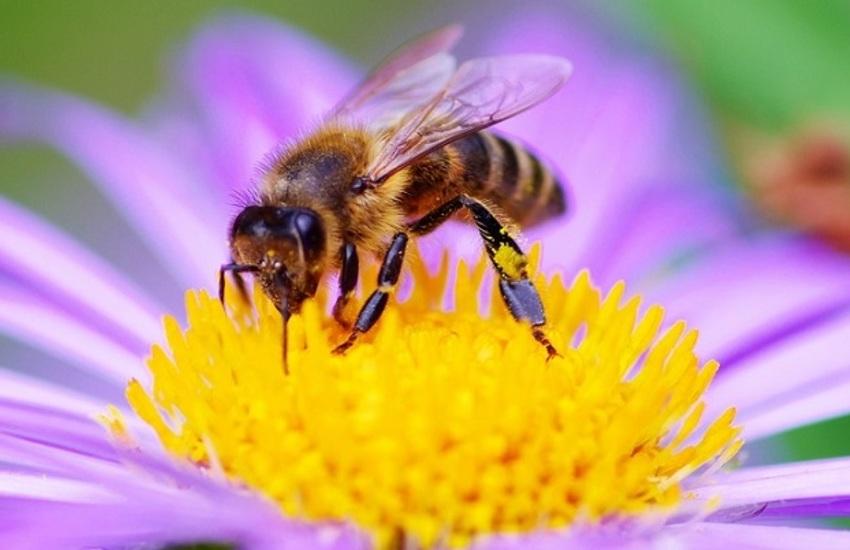 Padova, nasce il decalogo per tutelare api e biodiversità