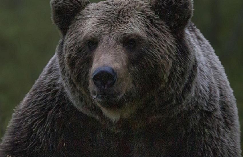 Orsi sequestrati da un circense: ospitati nel Parco nazionale, a Pescasseroli