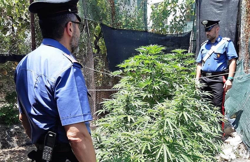 Villaggio Dusmet, i carabinieri sequestrano mini piantagione di marijuana