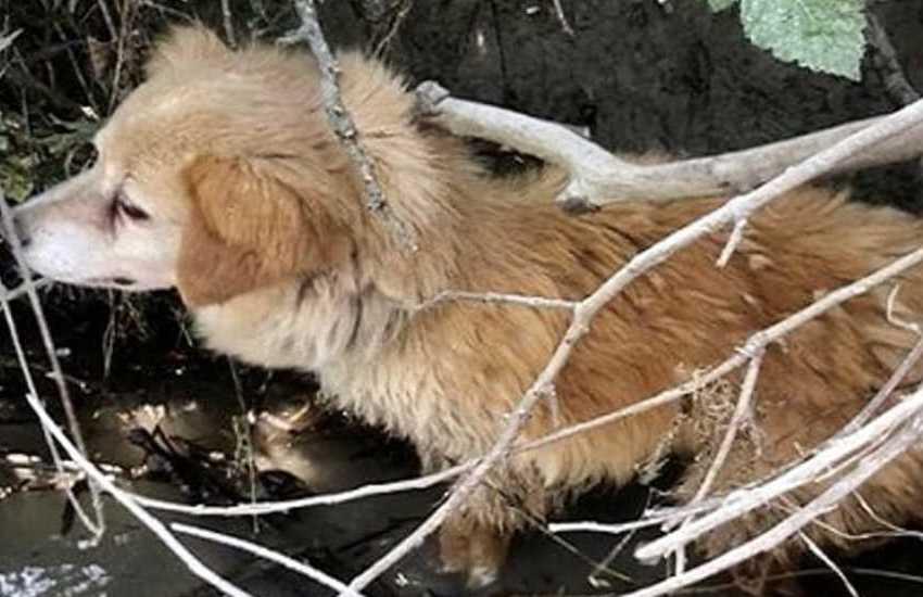 Alta Padovana, cagnolina bloccata sull'argine del Brenta: salvata dai vigili del fuoco