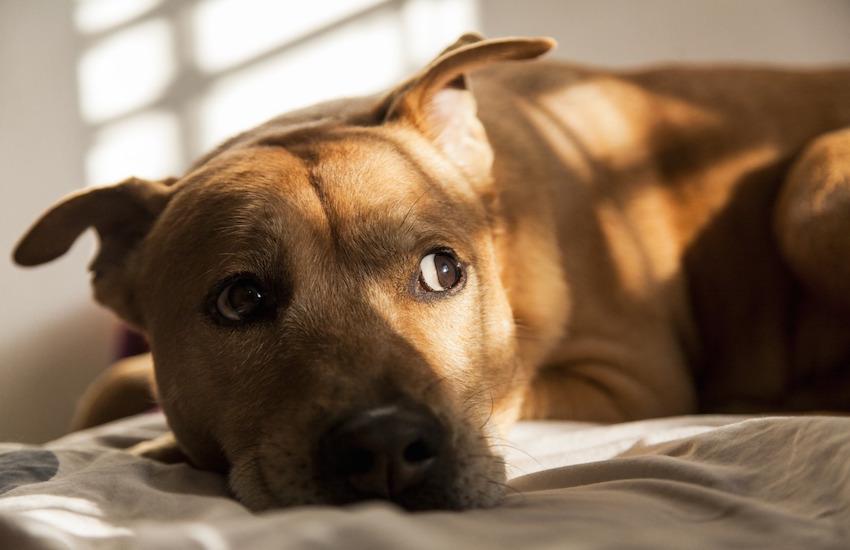 """Asta, salute animali: parte la campagna gratuita """"Se lo ami lo sterilizzi"""""""