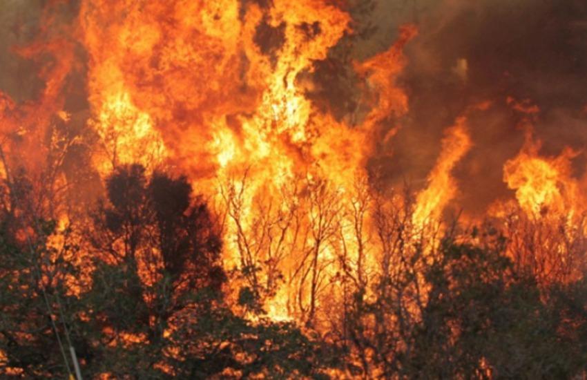 Incendi e incuria dei terreni, l'ordinanza del sindaco: multe salate per i trasgressori