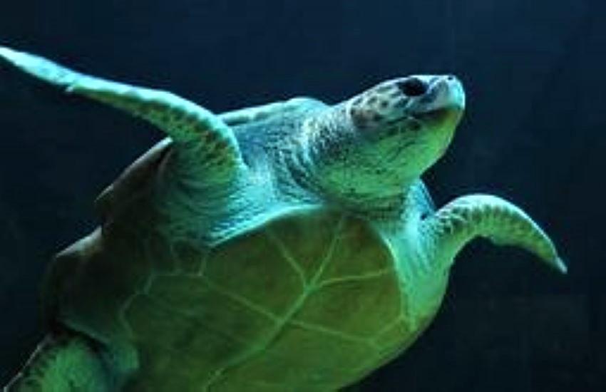 Via Marinuzzi, apre alle visite il centro recupero tartarughe marine