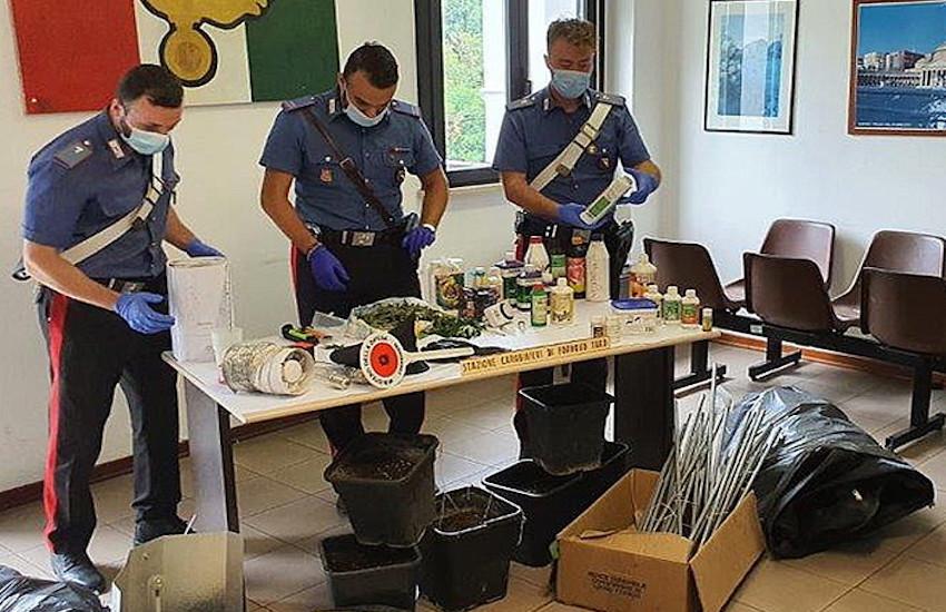 Varano Melegari – I carabinieri trovano una serra di marijuana nel sotto tetto