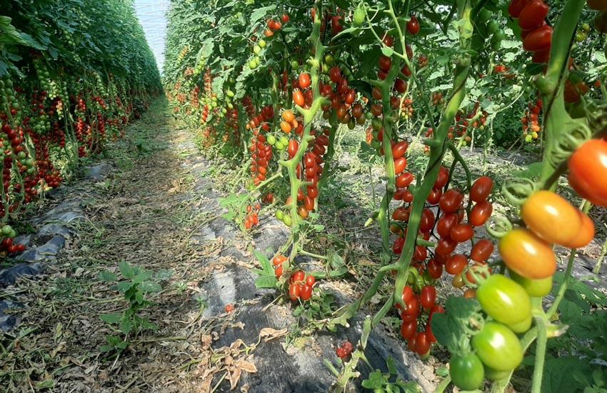 Caporalato: si paga più la bottiglia del pomodoro