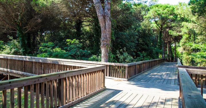 Jesolo, il Parco Pineta aperto agli eventi dell'estate 2020
