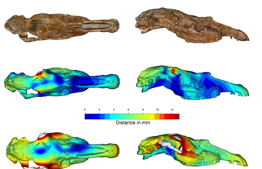 UniFI: Lo sviluppo della Paleontologia virtuale