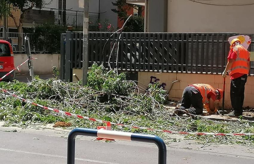 Bari, abbattuto il grande albero di ailanto. Gli ambientalisti: non finisce qui