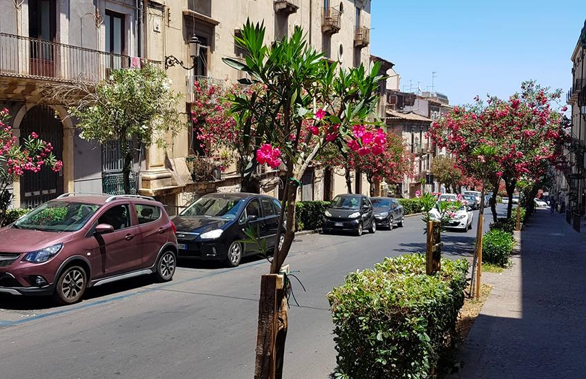 Verde a Catania, nuove piantumazioni di alberi in viale Regina Margherita e via Sangiuliano