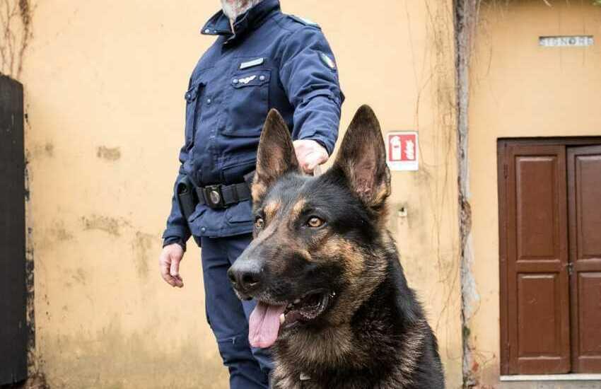 Il fiuto del cane Apache colpisce in Montagnola