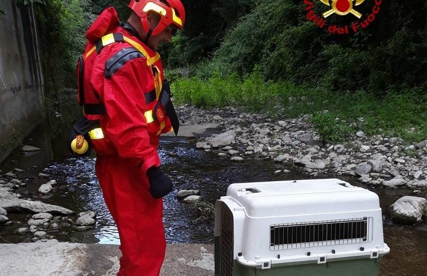 Avellino – I vigili del fuoco salvano un cane finito nel fiume Sabato in zona Pianodardine