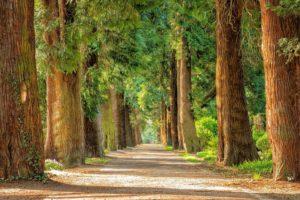 Taglio di alberi non autorizzato, Lelio De Santis: 'Bisogna intervenire'