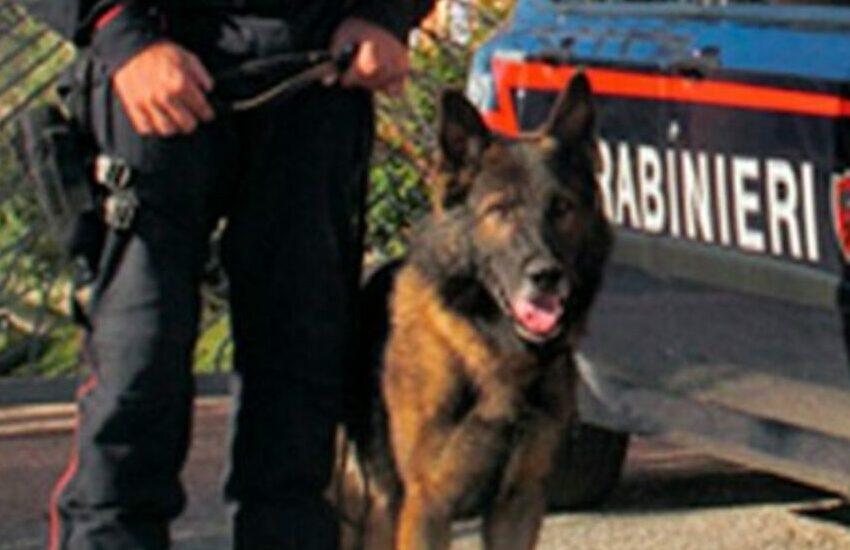 Padova, sequestrato mezzo etto di hashish: scovato dal cane antidroga Tarol