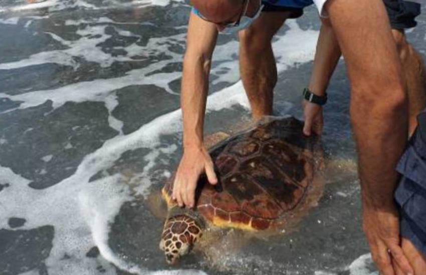 Trecentina e Camilla-Regina, le tartarughe tornano in mare, dopo le cure all'Acquario di Genova