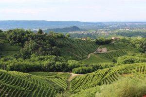 Viticoltura, bandi biennali per 13,7 milioni di euro