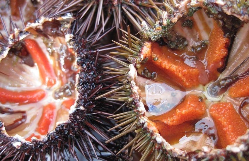 Cucina regionale, 2 piatti di mare alla siciliana