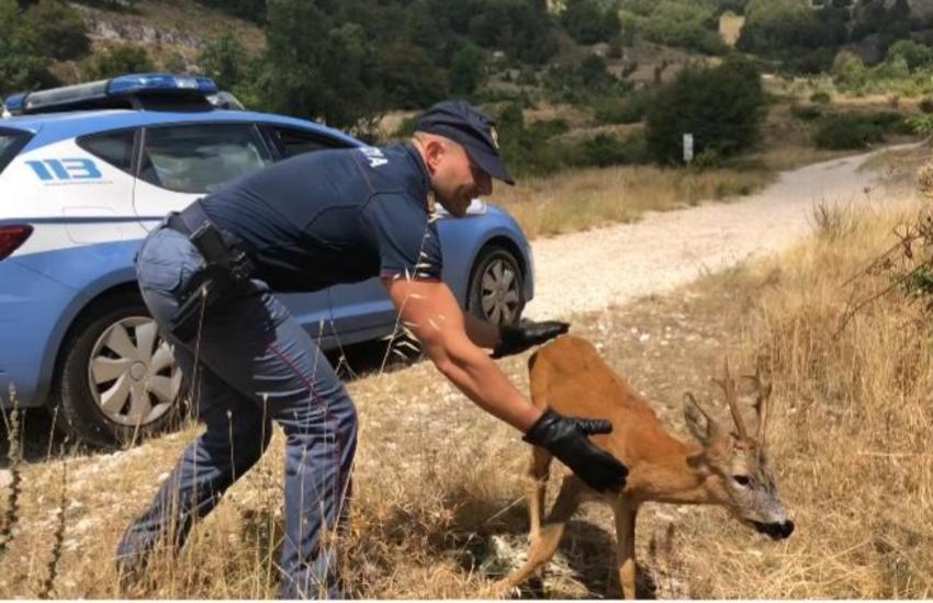 Cervo bloccato in un giardino a Sora: liberato dalla polizia