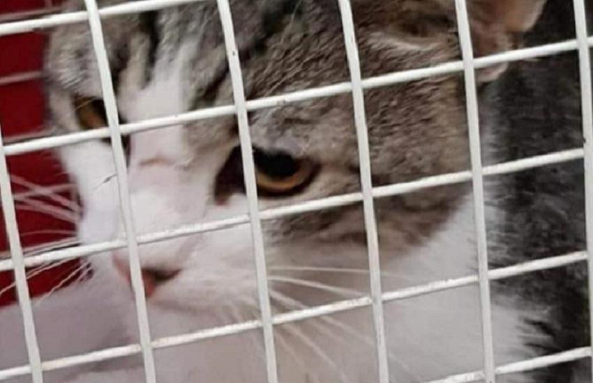 Gatto salvato a Coppito, sta bene: la fine di una travagliata vicenda