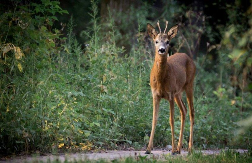 """Confagricoltura  Toscana lancia un appello al  futuro governatore della regione:  """"Modifichi la legge ed elimineremo  i danni provocati  dagli animali selvatici"""""""