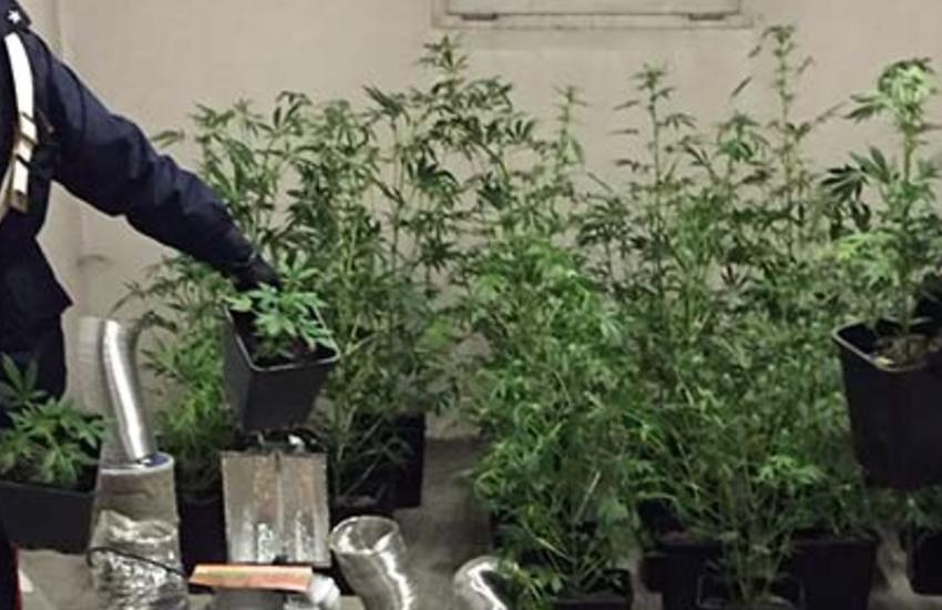 Bassa Padovana, coltivava marijuana in giardino: denunciato