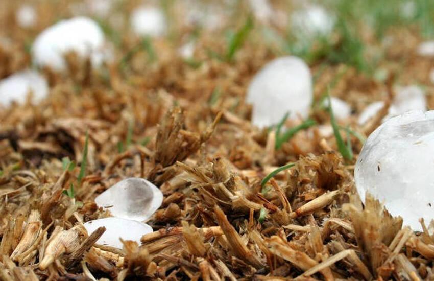 Padova, gravi danni alle colture dopo la tempesta: chiesta lo stato di calamità naturale
