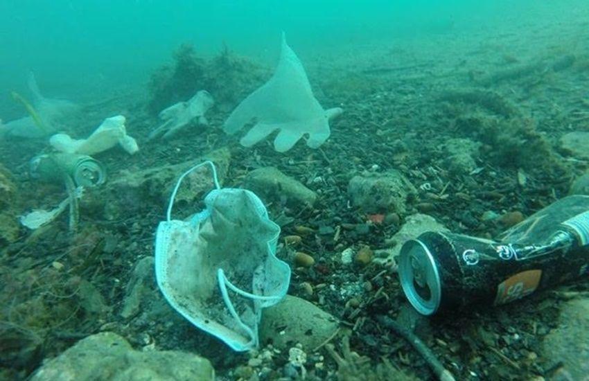 Sul fondo dei mari di mascherina si può morire: storia (e video) di un pesce fortunato