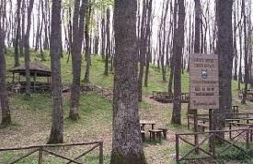 Parma, fungaiolo 78enne scomparso: si era addormentato nel bosco