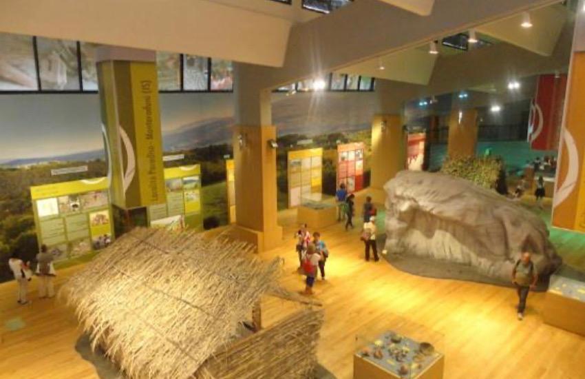 Museo Paleolitico, esposto il dentino del bambino vissuto 600.000 anni fa