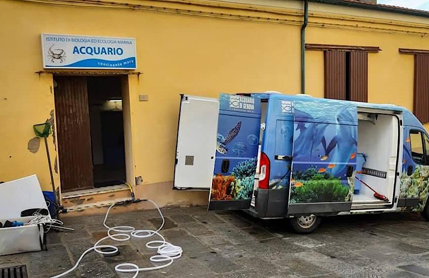 Chiude l'Acquario di Piombino: tutte le specie ittiche trasferite a Livorno