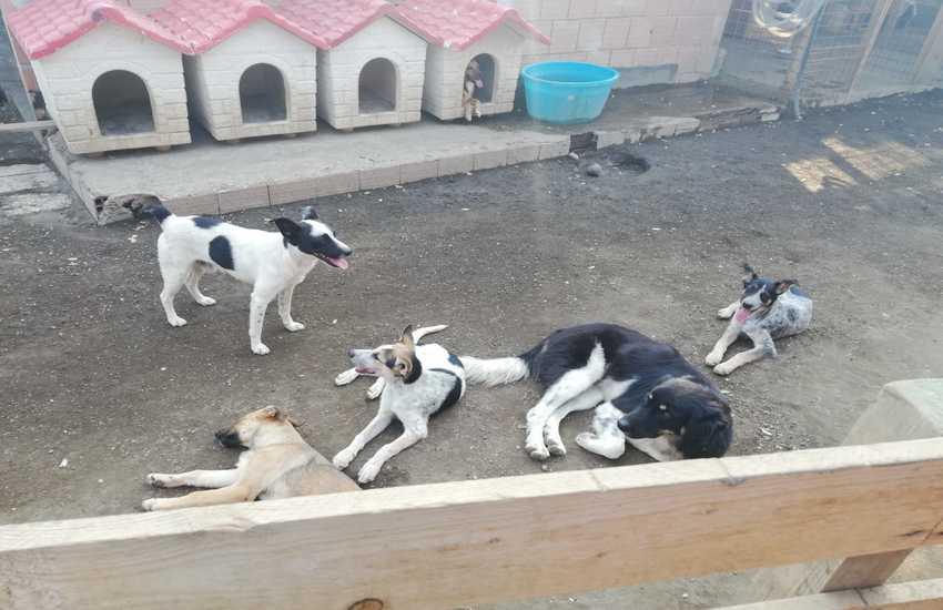 Amici a 4 zampe, un paradiso per i cani in cerca di adozione