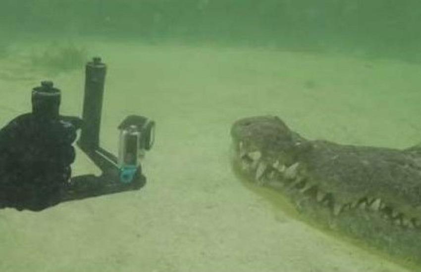 Videomaker della Florida, originario di Avellino, spopola per i video a contatto con squali e coccodrilli
