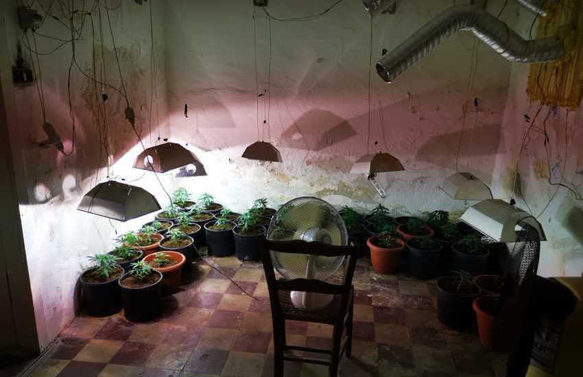 San Cristoforo, trovata serra per la coltivazione di marijuana in una casa abbandonata