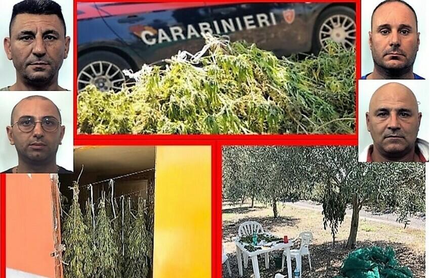 Belpasso, duro colpo ai clan della zona, sequestrati 70 Kg di marijuana, quattro le persone arrestate