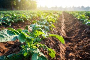 Padova, il Covid elimina 2.755 posti lavoro in agricoltura