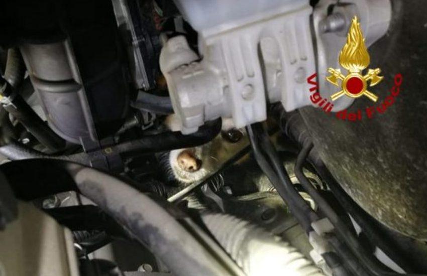 Vigodarzere,cane intrappolato nell'auto: salvato dai pompieri