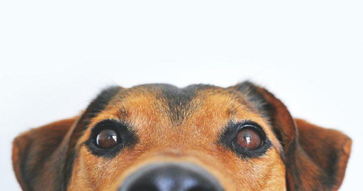 Quarantena per Covid, a Bagheria un servizio gratuito di dog sitter