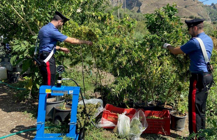 Piantagione di canapa indiana a Castelmola: padre e figlio arrestati dai carabinieri