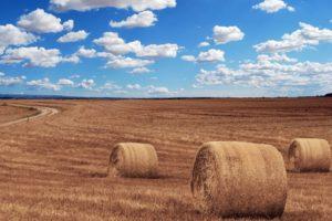 Agricoltura toscana: quasi 200 milioni i contributi