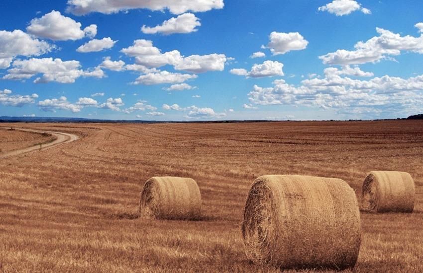 "Psr, Imprudente: ""60 milioni di euro erogati nel 2020 a imprese agricole"""