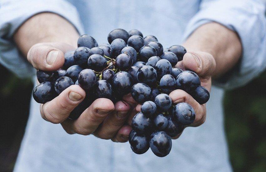 Veneto, primato italiano nel 2020 per produzione di vino
