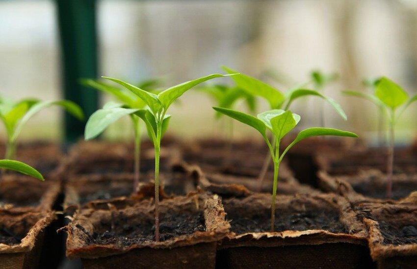 Imparare l'arte degli orti in vaso all'Ecosportello di Verona