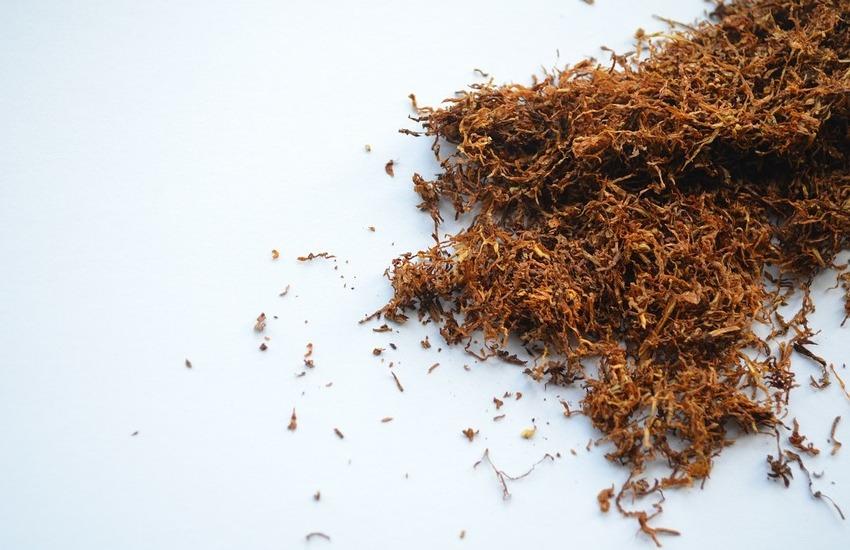 Verona primo polo del tabacco del Veneto con 12mila tonnellate prodotte
