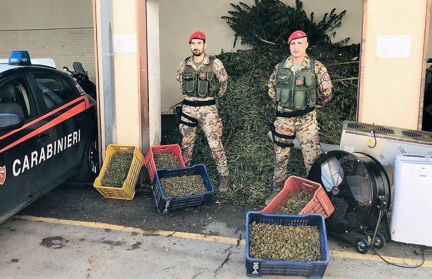 Paternò, operazione antidroga, 6 arresti Sequestrati 1.300 Kg di marijuana – Foto gallery