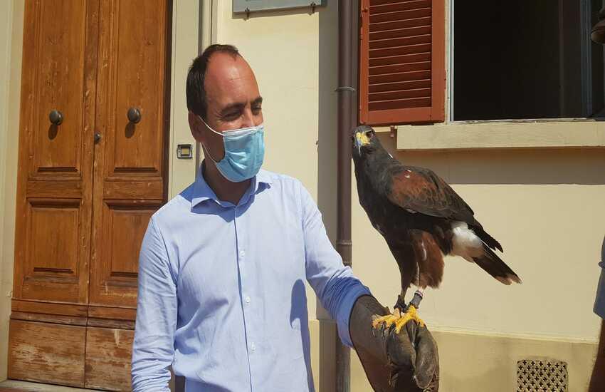 Missione compiuta per Lady poiana:  via i piccioni dal centro di Montemurlo