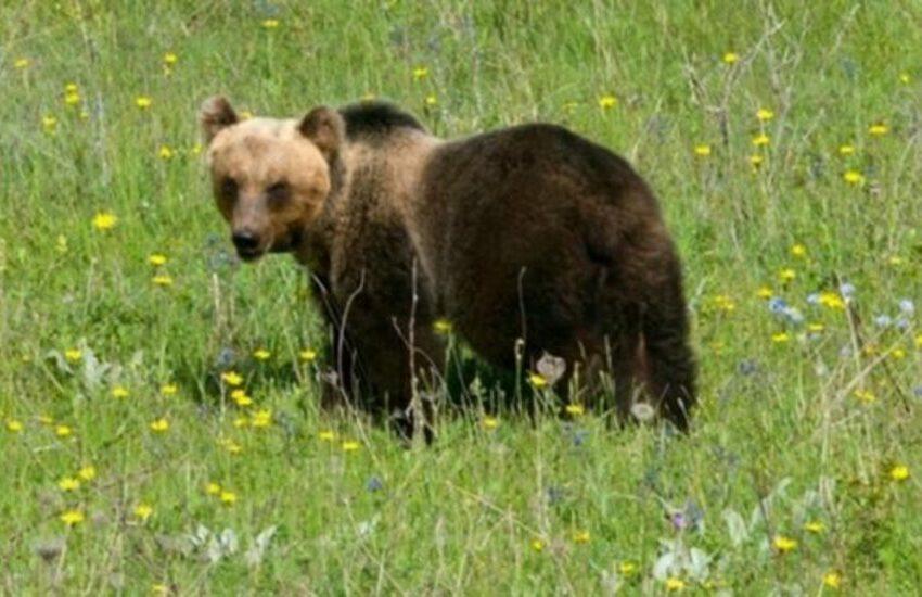 Christmas is coming (it's here): un'orsa ci racconta una storia