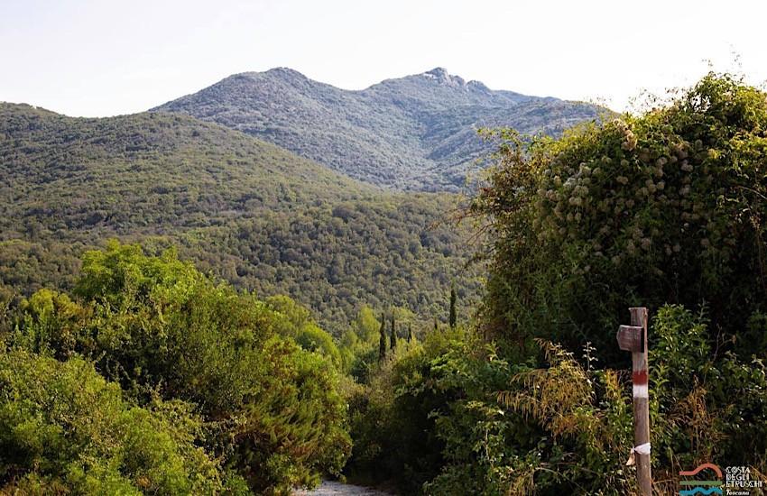 Comune di San Vincenzo: Gestione e tutela del territorio, il Comune istituisce il 'Tavolo per l'Ambiente'