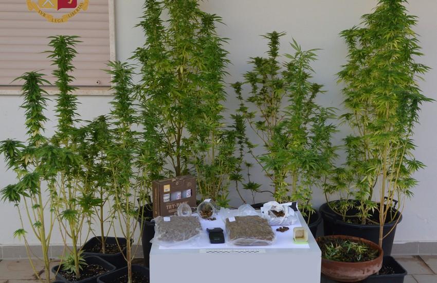 Marijuana coltivata sul terrazzo di casa, arrestato 24enne di Galatina
